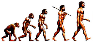Conception of Man's Evolution from Apes
